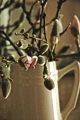 Magnolia branches with buds starting to open, arranged in a cream coloured ceramic beer tankard.