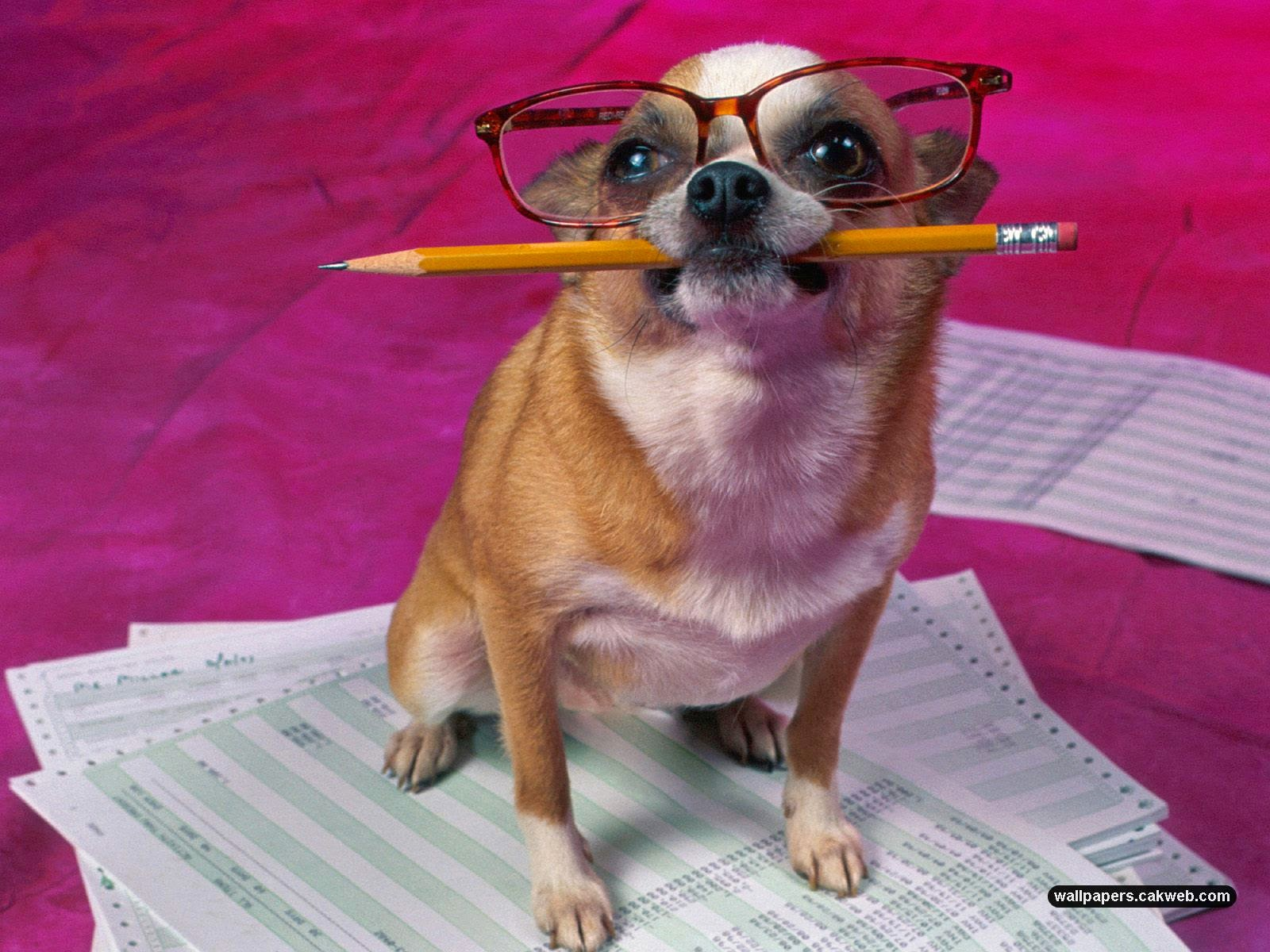 foto dan gambar lucu hewan anjing pintar