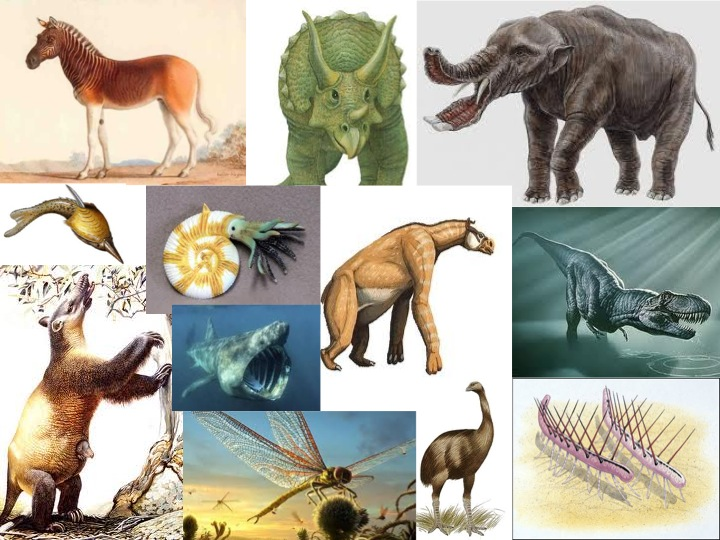 issue of extinction of plants and animals Plants that thrive in damp, cool conditions now simply wither and die during prolonged dry periods a study in nature indicated that within the next 50 years a quarter of the world's land animals and plants could become extinct.