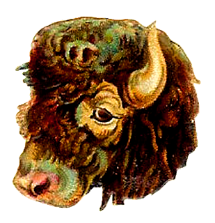 buffalo animal digital clip art