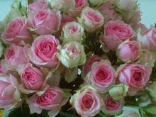 Des roses comme s'il en pleuvait...