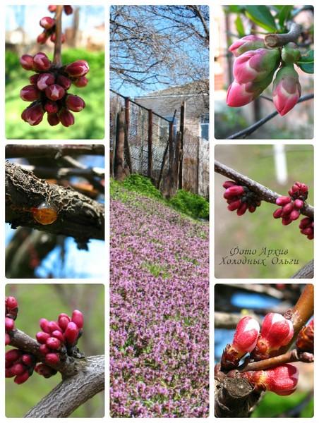 Розово-лиловое