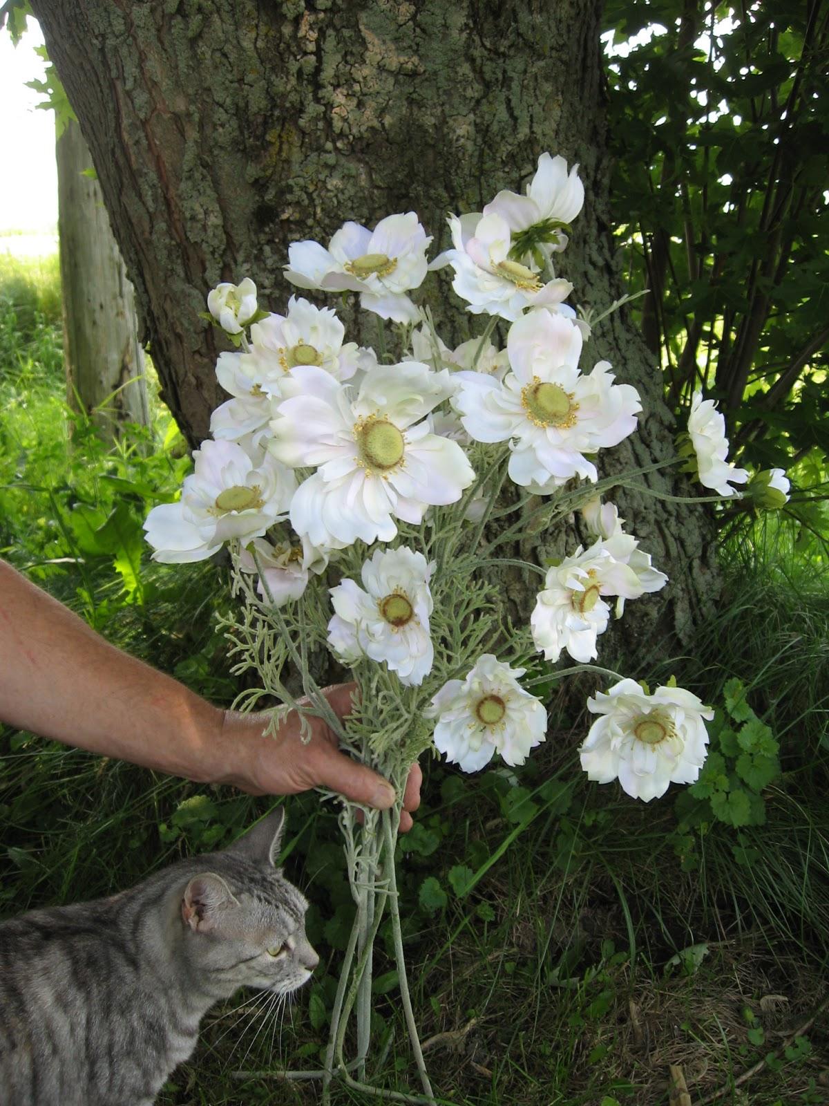 cosmos fleurs photos