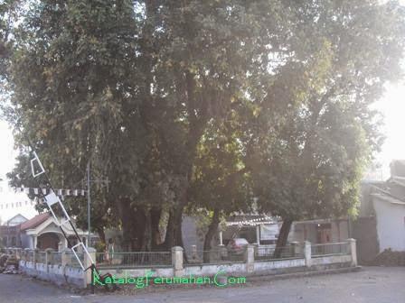 Pohon beringin besar Alam Pesona1