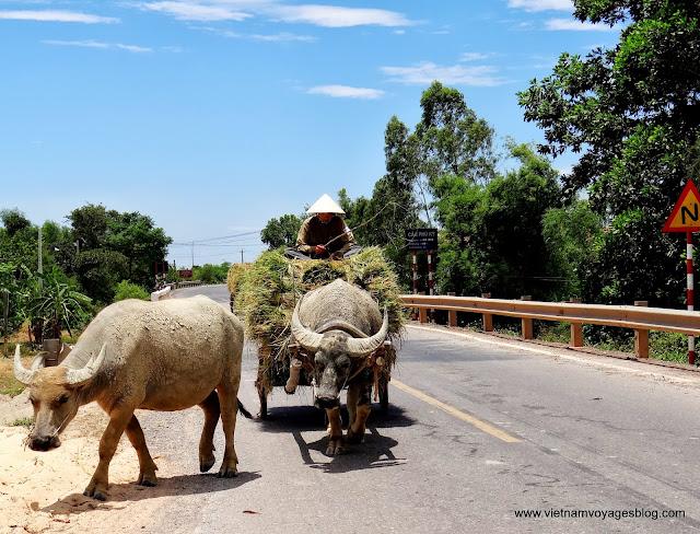 DMZ Quang Tri - May 2013
