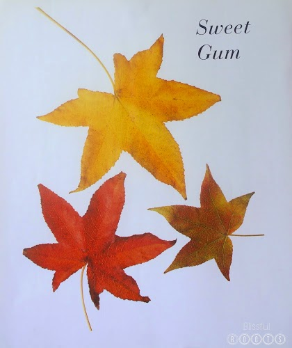 Autumn Leaves Book Pages for a Gallery Wall