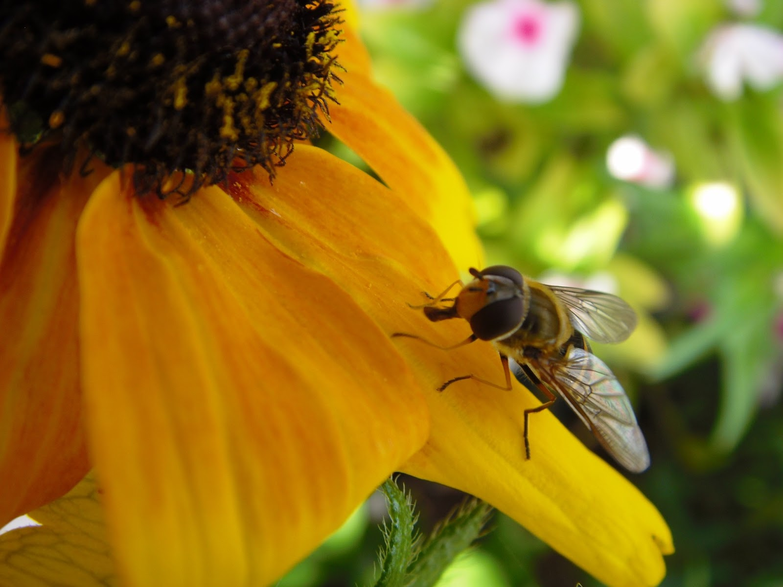 Вышивка крестом пчела на подсолнухе