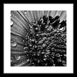Black and white abstract macro shot of a flower