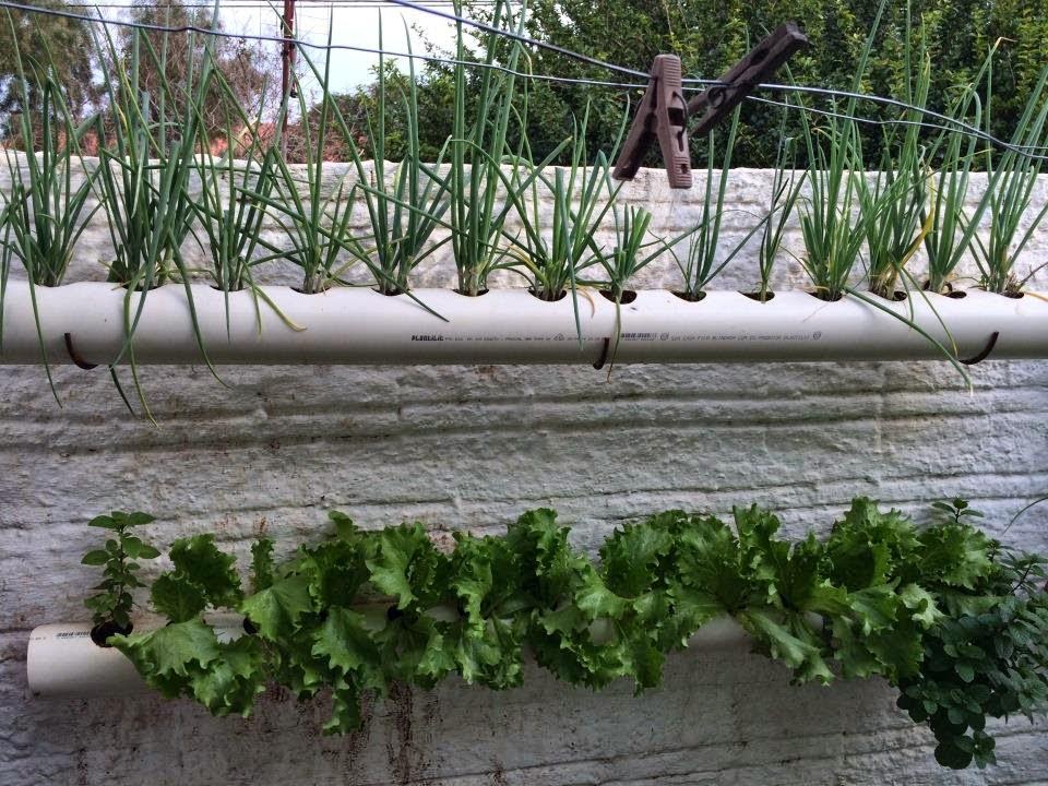 Bem vindos ao mihor mini hortas horta em cano de pvc for Casa para herramientas de pvc