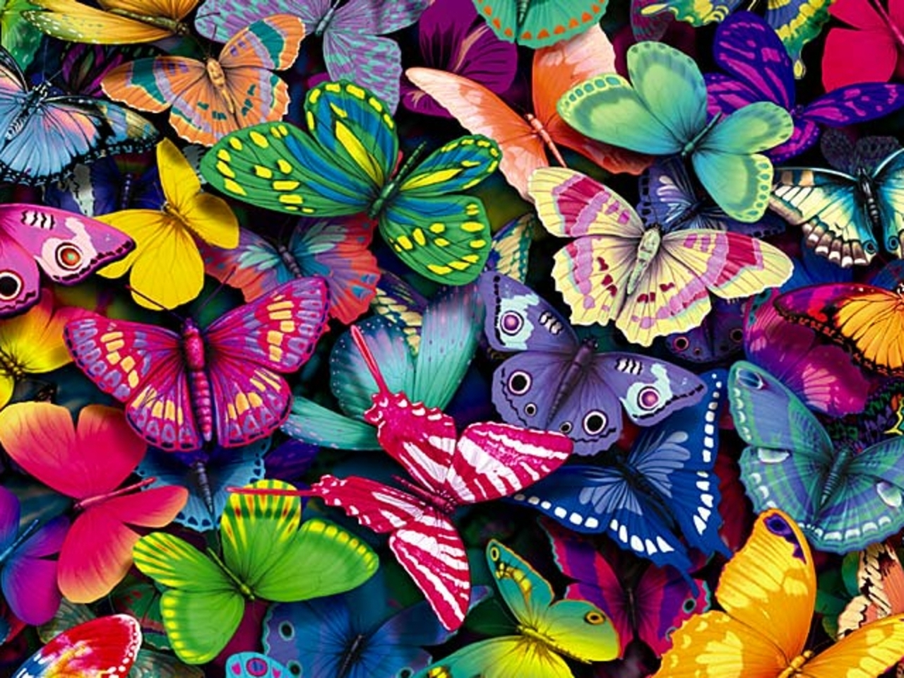 How many butterflies live