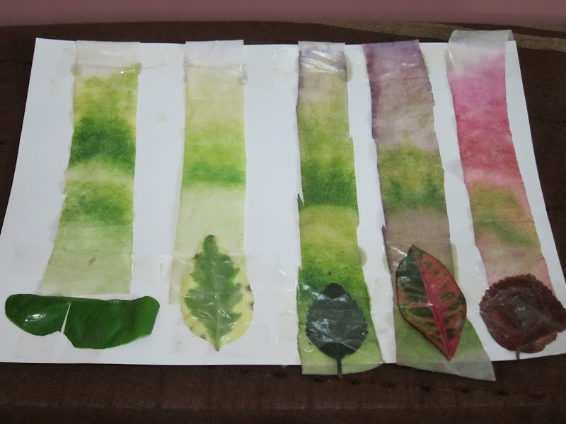 pigments in leaf chromatography Aim : to separate and identify of the pigments in leaves by paper chromatography principle of design: in this experiment, a strip of filter paper containing a small spot of concentrated chlorophyll pigment is dipped in a mixture of developing solvent, the pigments was carried up the strip as the solvents move up.