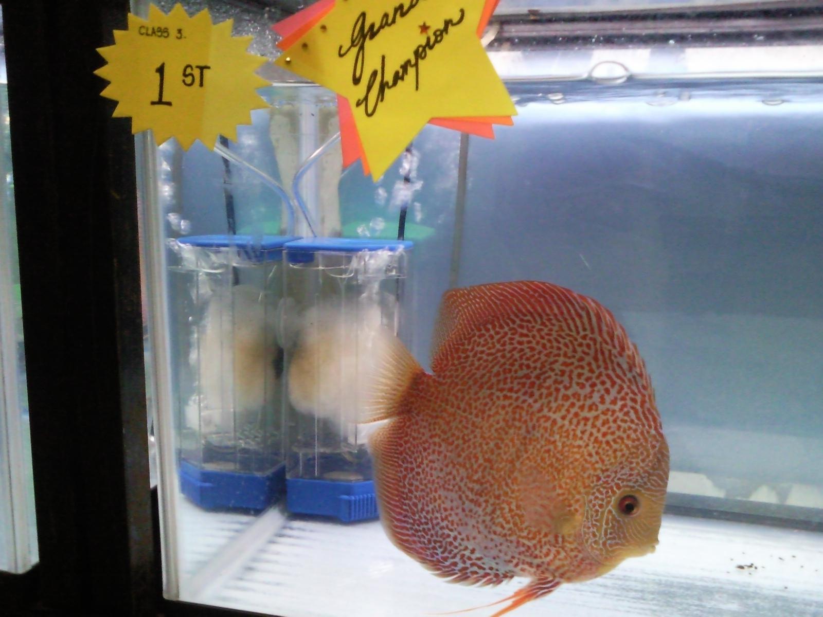 Tropical Fisher Man Fish Tanks And Aquarium CRS: Discus Club 12th ...