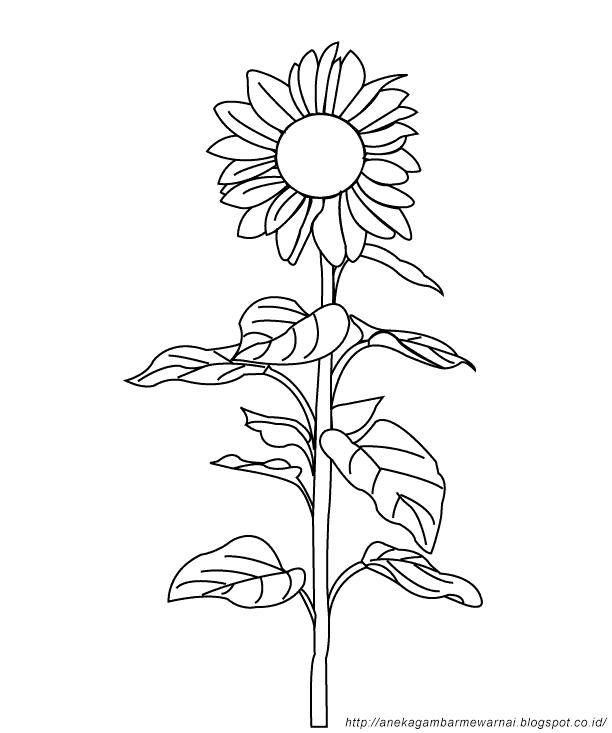 Zona Ilmu 2 Gambar Mewarnai Bunga Matahari Untuk Anak Paud Dan Tk