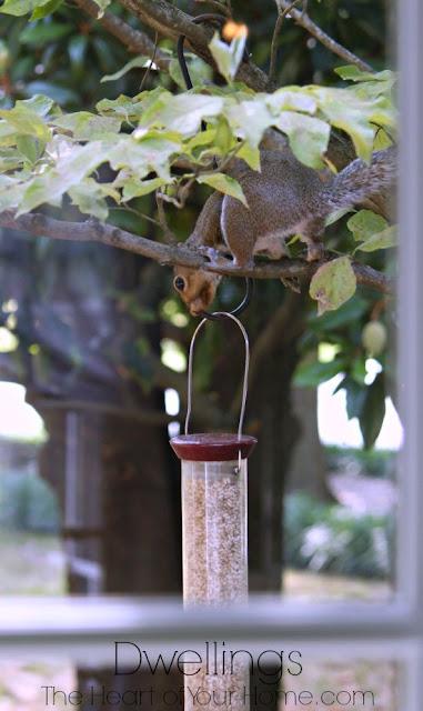 Thieving squirrel!