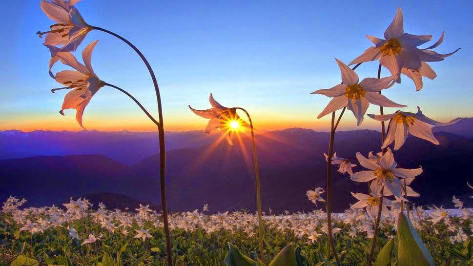 horizon-sky-sunset-dawn-nature