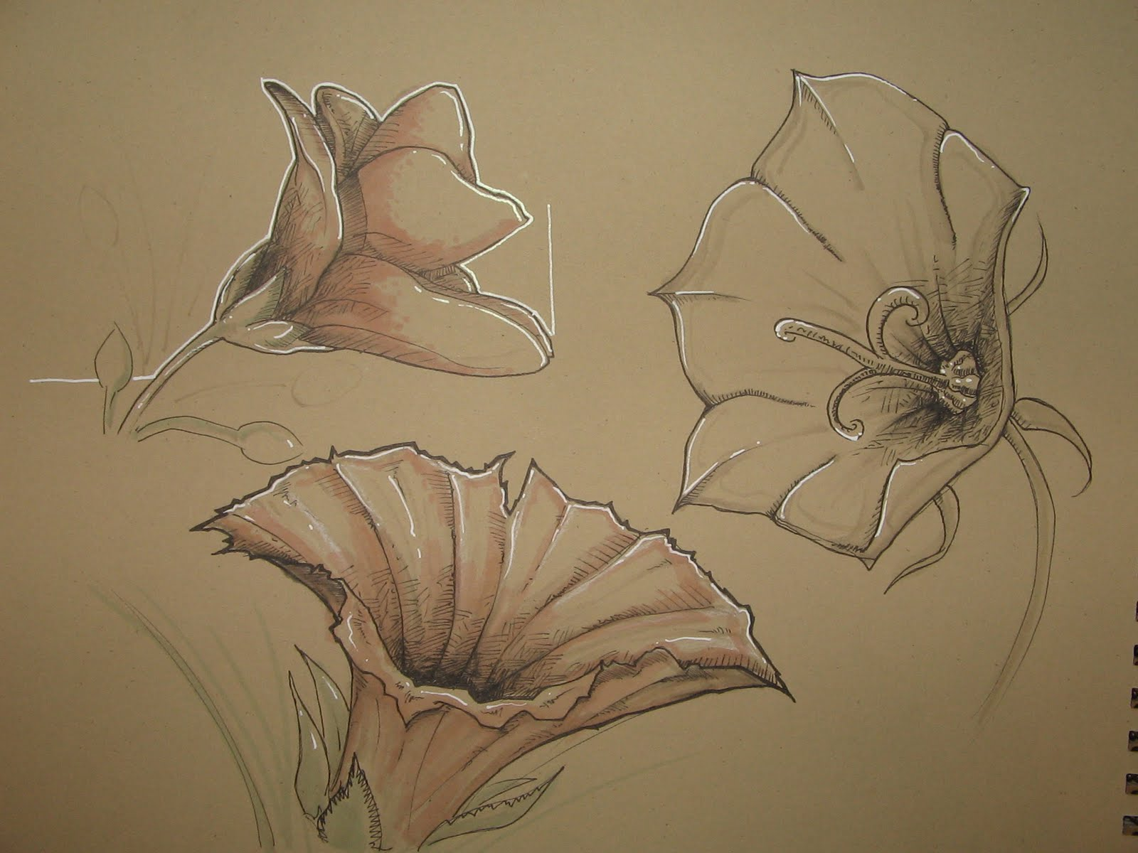 The Art of Julien Vandois Plant and flower sketches