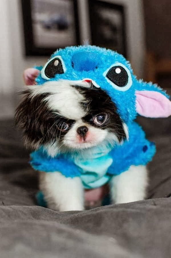 Cute dogs - part 3 (50 pics), cute little dog wears stitch costume