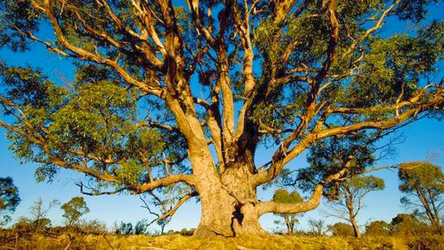 Pohon, pohon ini bukan sembarang pohon ternyata pohon ini mempunyai