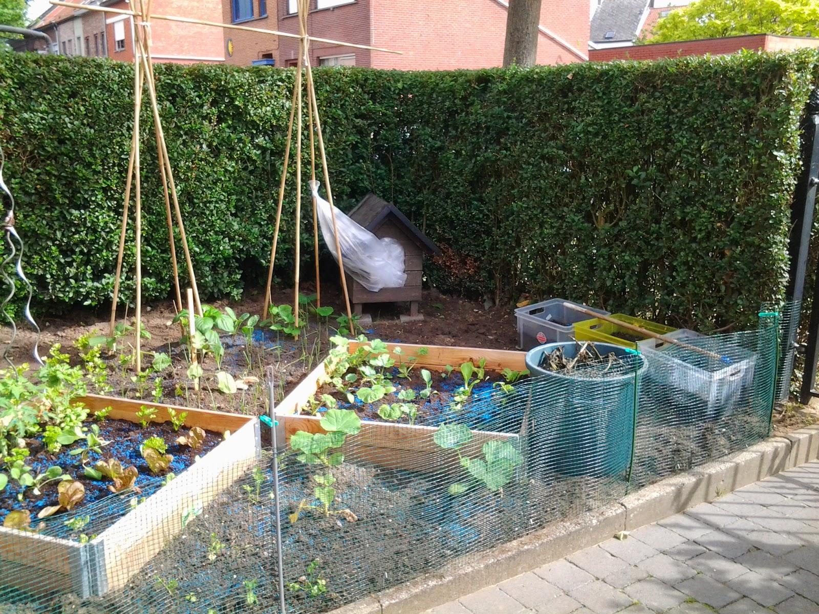 Jade stig muizjes een nieuw hobby for Groenten tuin