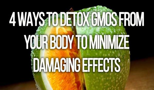 4 Ways to Detox GMOs from Your Body to Minimize Damaging Effects
