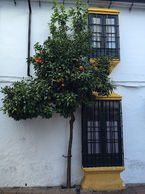 A bitter orange tree in Ronda