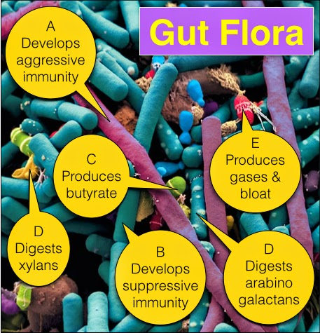 how your gut bacteria influences your emotions