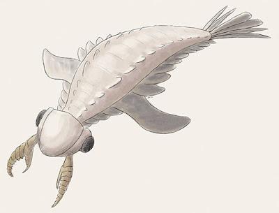 Lyrarapax cambric invertebrata