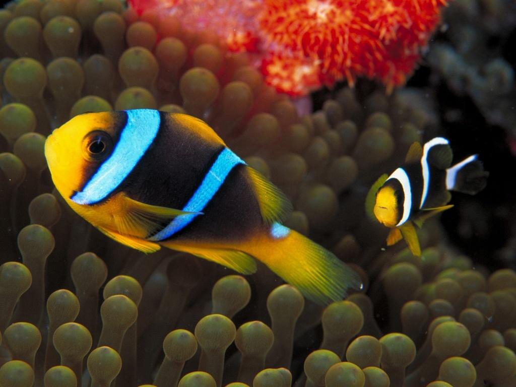 http://1.bp.blogspot.com/-XHNYeHKudEs/Tkjat8z3wRI/AAAAAAAAABc/d-Log8HR6uQ/s1600/Underwater+Wallpaper+%252822%2529.jpg