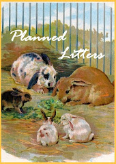 Planned Future Litters