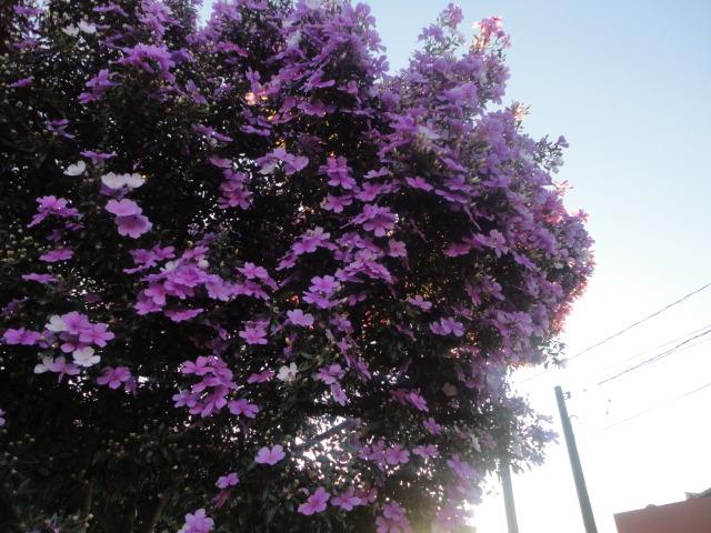 Flores de Nova Fátima