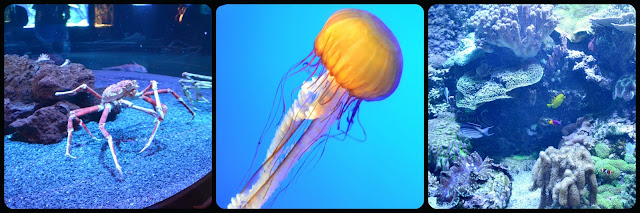 Ripley's Aquarium of the Smokies, jellyfish, coral