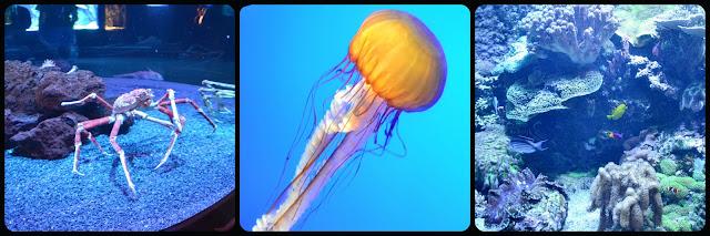 Ripley's Aquarium of the Smokies, jellyfish, coral