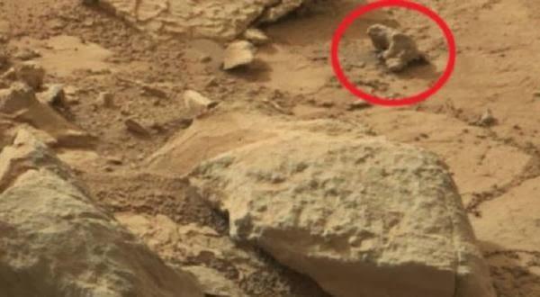 Penampakan Wujud Iguana Ataukah hanya Batu biasa?