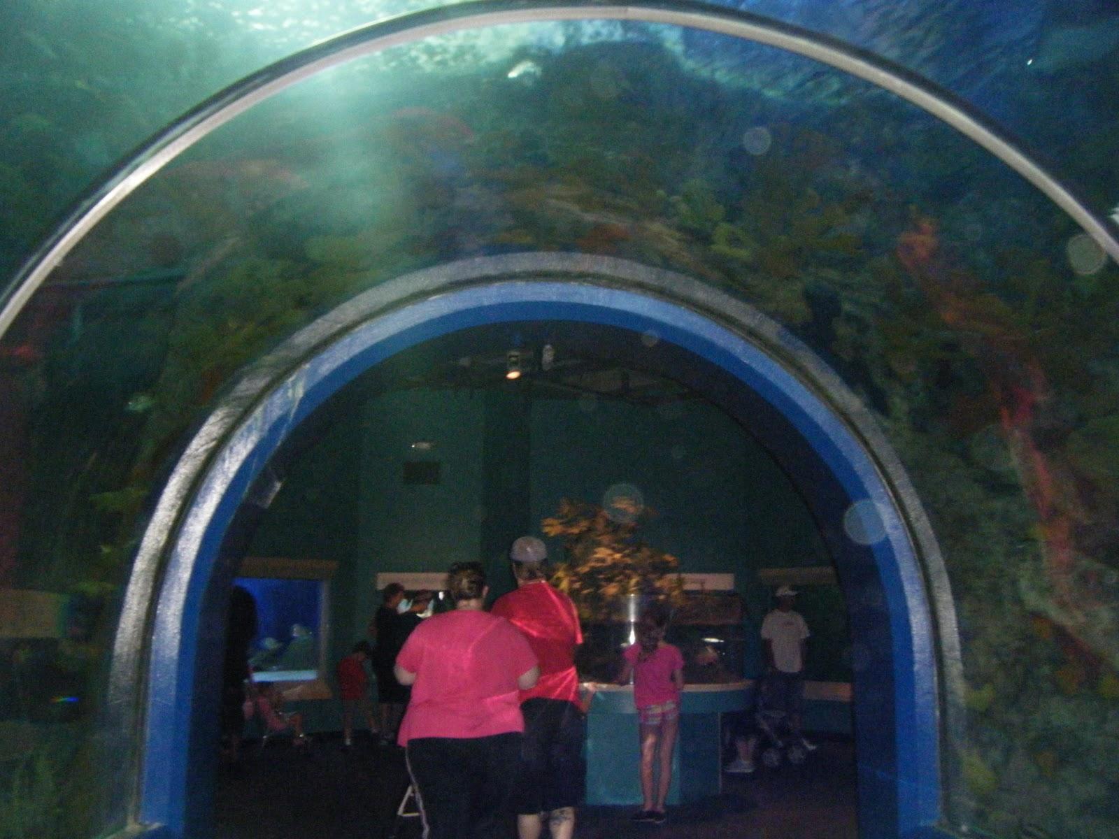 Audubon Aquarium Of The Americas New Orleans Free Stuff