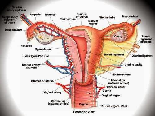 Image Cara Ampuh Menyembuhkan Kanker Serviks