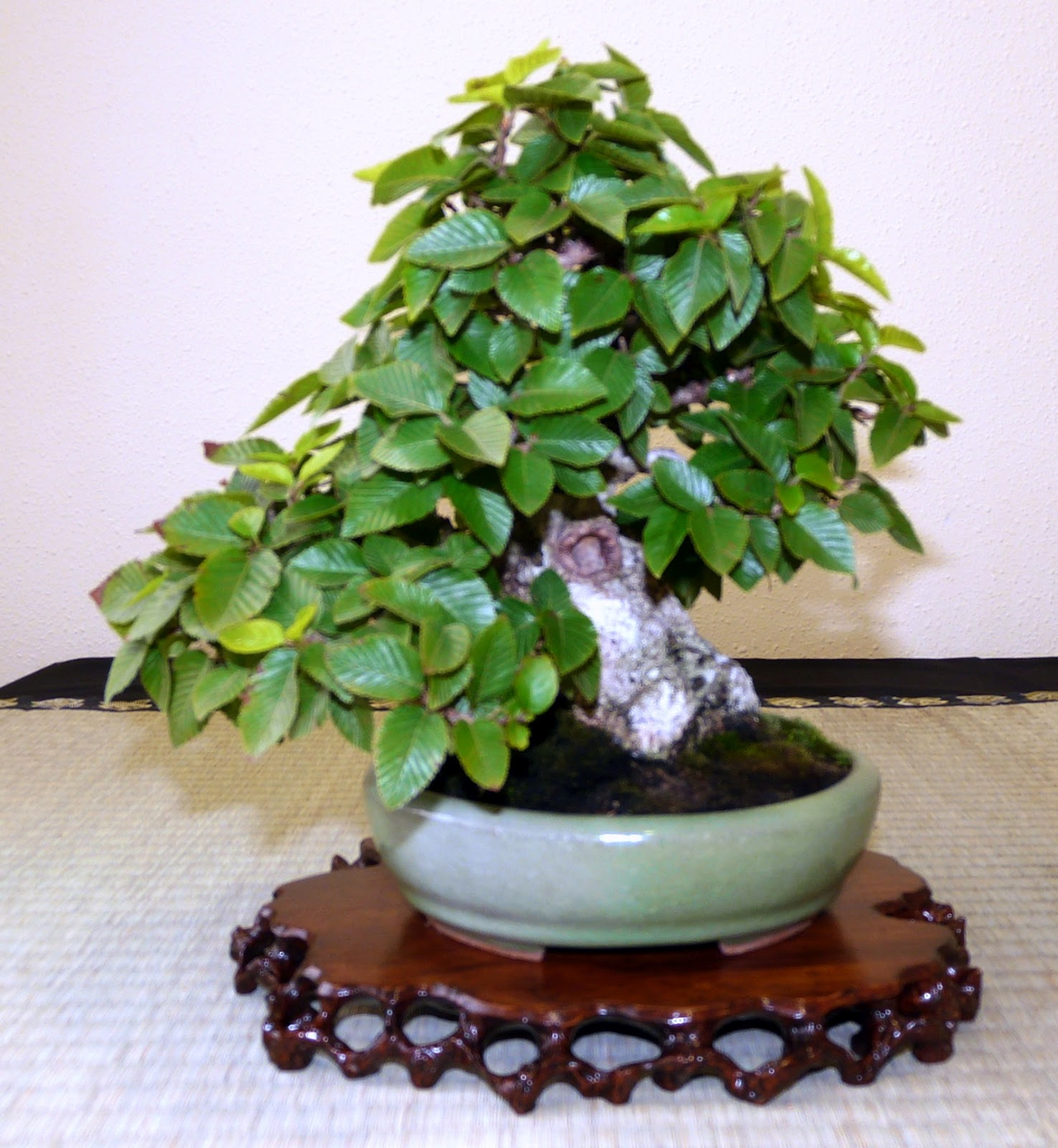 Bespoke Bonsai Stands GALLERY