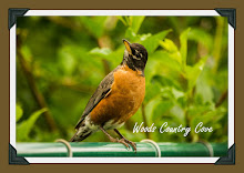 Mrs Robin , My Favorite Song Bird