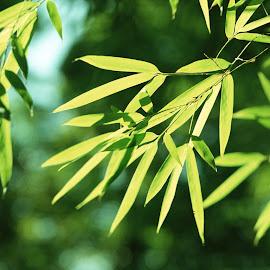 Gambar daun kualitas tinggi