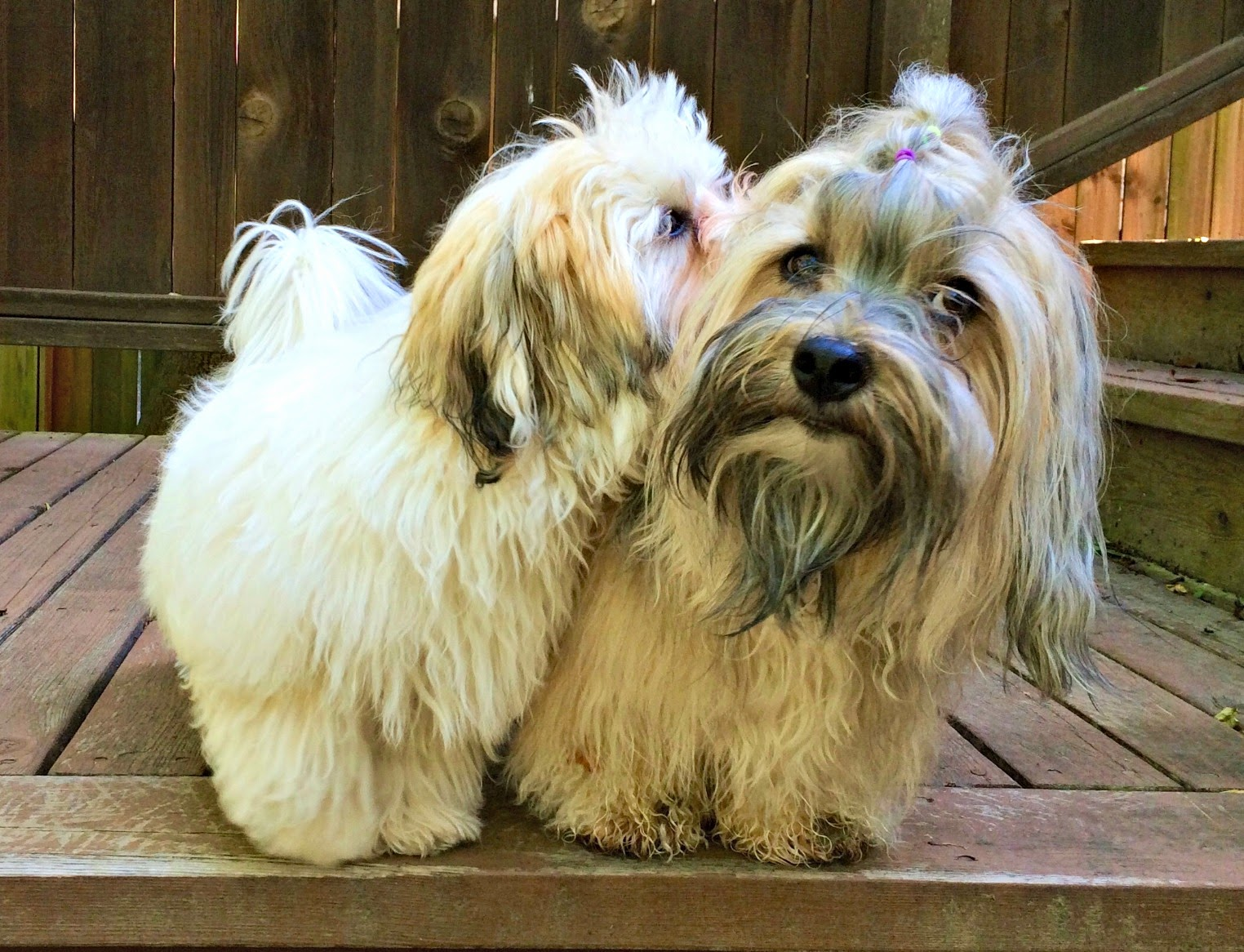 To Dog With Love Puppyhoodcom Offers Help With Raising A Puppy - 26 dogs puppyhood photos