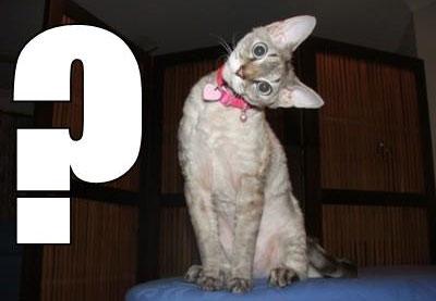 ¡Feliz cumpleaños! - Página 7 Gato%2Binterrogativo