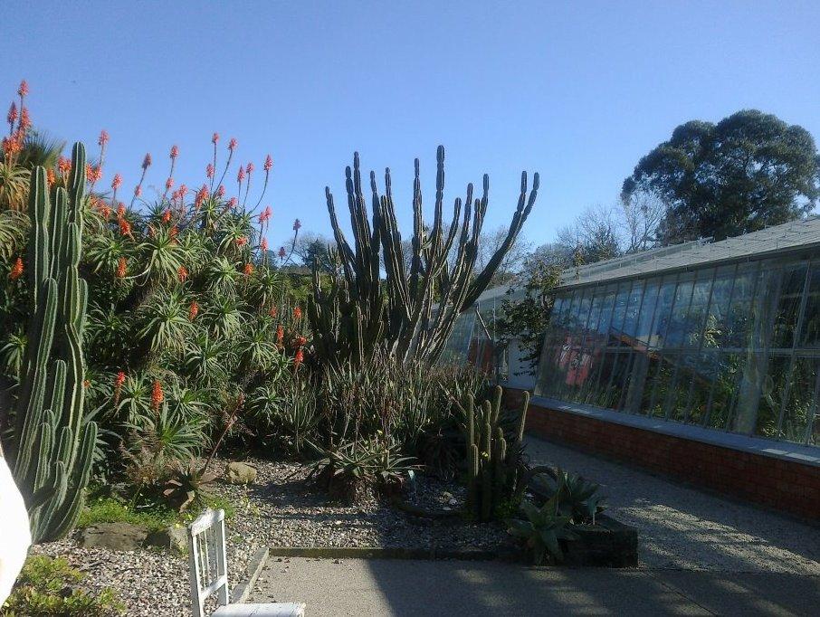 Jardim Suspenso Janeiro no Jardim Botânico do Porto