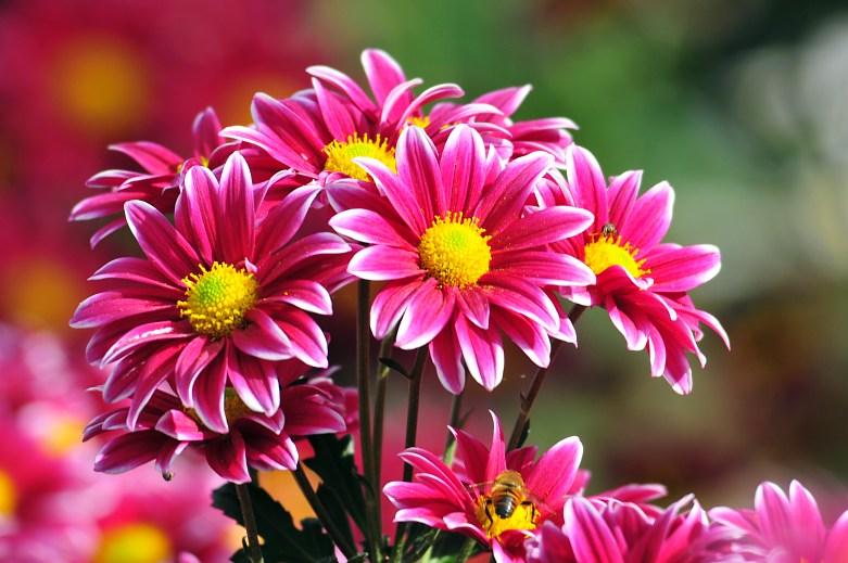 Kumpulan Gambar Bunga Warna-Warni | Kumpulan Gambar-Gambar Menarik