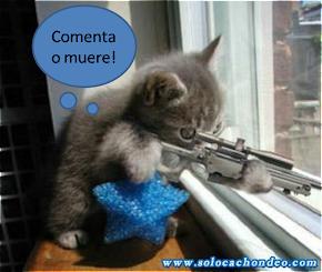 gatito terrorista!!!!!! un comentario vale mas que el dinero :D