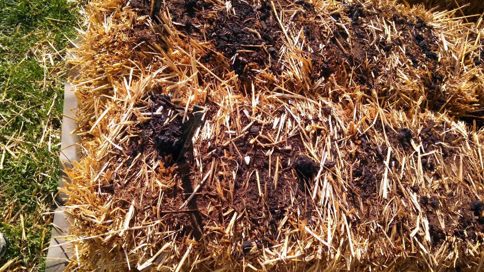 Straw Bales, Day 4, Before Watering