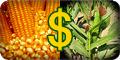 valor do milho