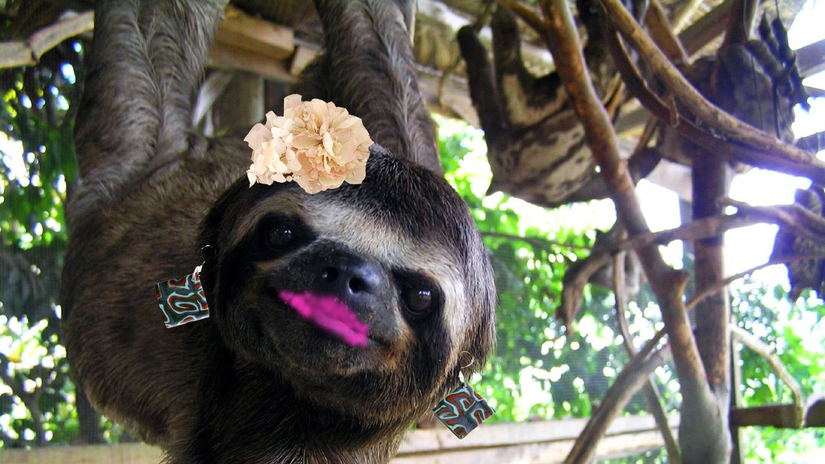 10 Sloths Who Deserve a Snazzy Makeover