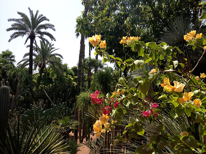 travel marrakech majorelle garden