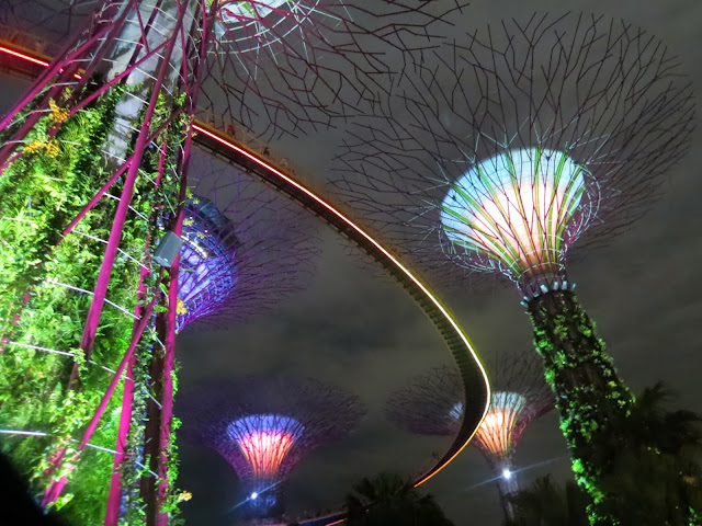 Gardens by the bay supertrees OCBC skywalk