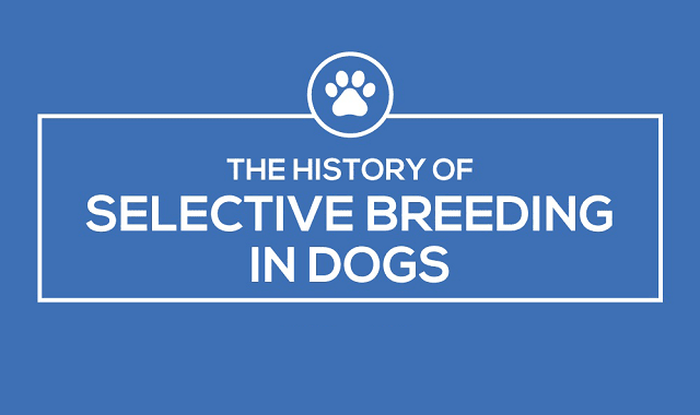 The History of Selective Breeding in Dogs