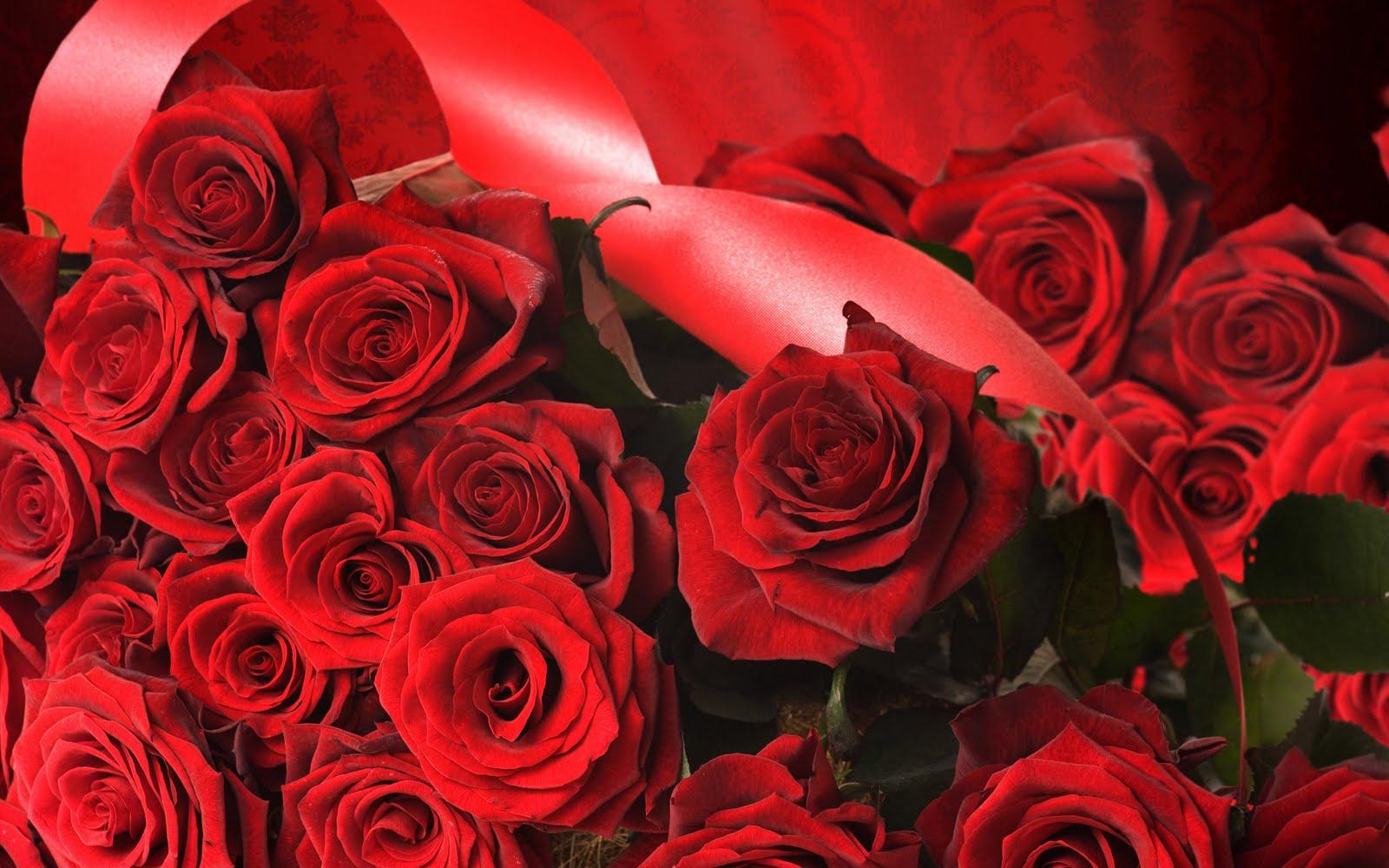 Imagenes bonitas rosas rojas Imagenes bellas para  - Imagenes De Rosas Hermosas Rojas